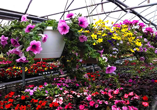 Greenhouses Plants Amp Shrubs At Jones Family Farm Market