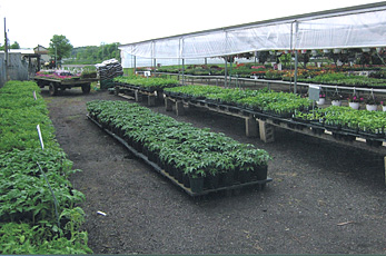 Fresh produce, plants, flowers, shrubs and more at Jones Family Farm Market in Edgewood, Maryland.