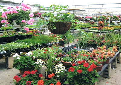 Greenhouses Plants Shrubs At Jones Family Farm Market In Edgewood